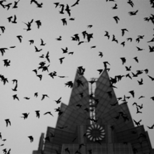Bats flying around a steeple